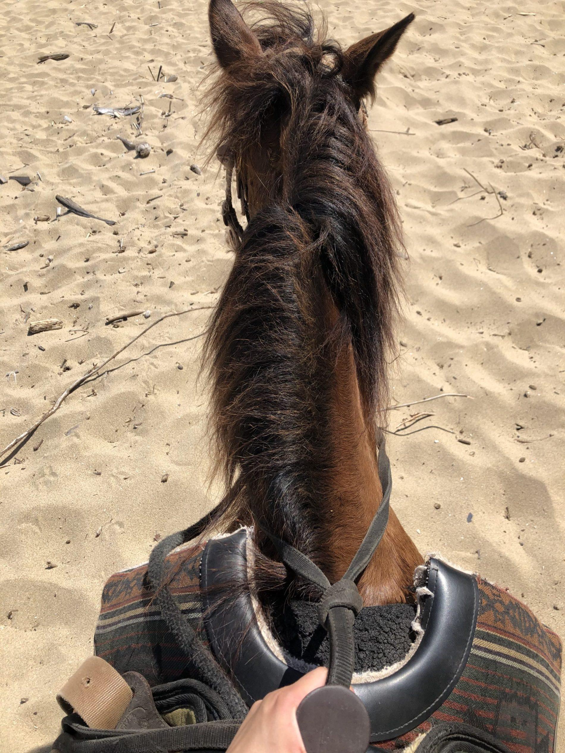 Tabitha on Peanut the horse in Puerto Rico