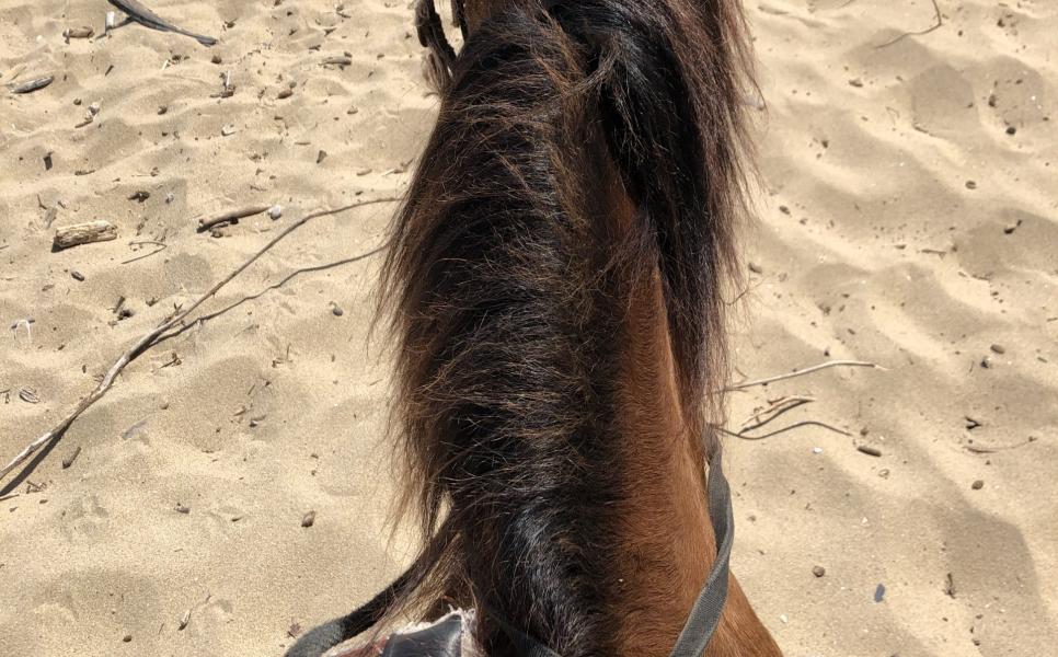 Horseback Riding in Isabela, Puerto Rico